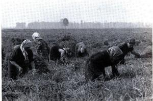migrant field laborers emilia region italy 1930s