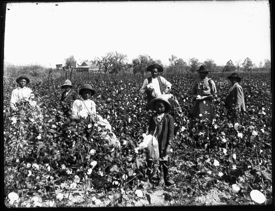 slaves in field